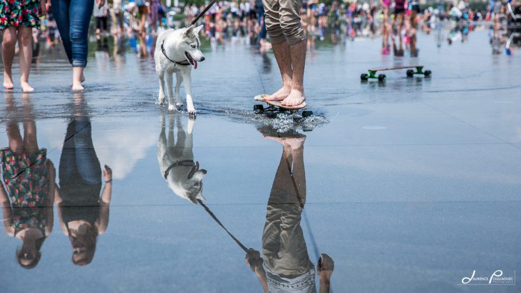 course skate chien bordeaux