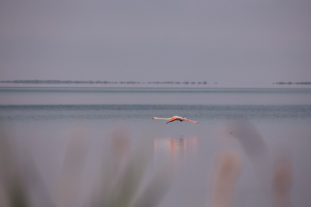 flamand rose parc naturel camargue