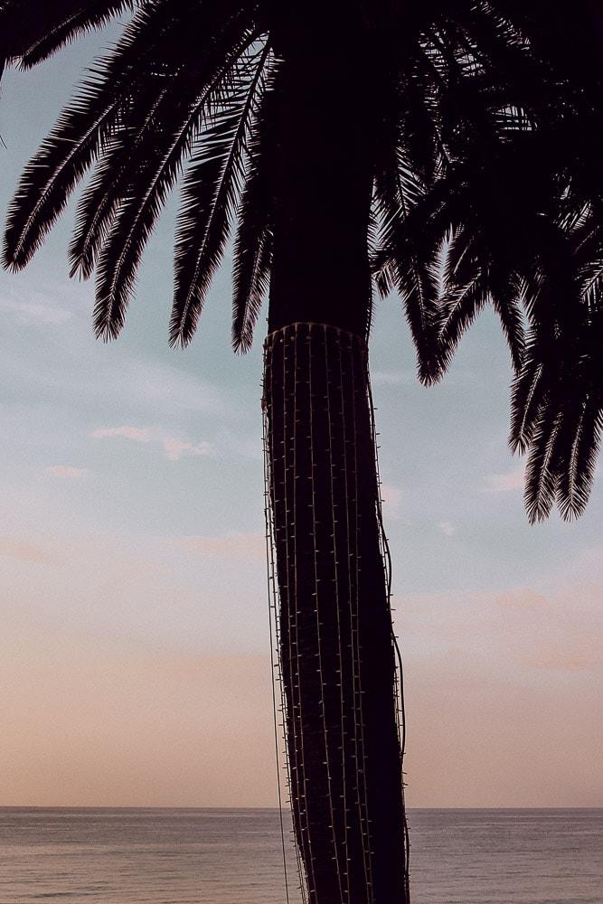 palmier cote d'azur
