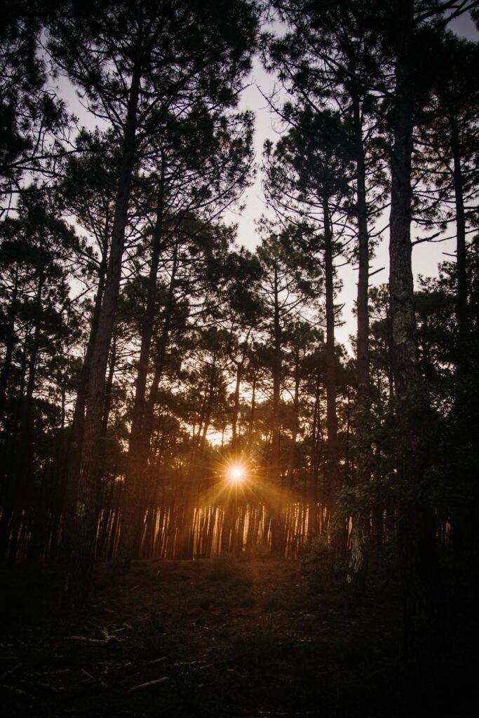 séance engagement au lever du soleil dans les landes